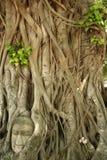 印度榕树buddhas顶头泰国结构树 库存图片