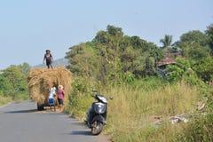 印度的干草 免版税库存照片