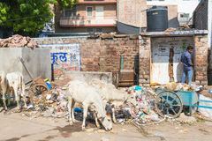 印度的肮脏的街道 库存照片