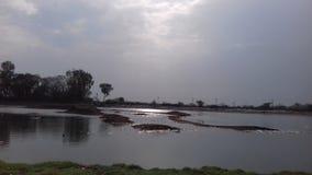 印度自然 图库摄影