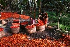 印度蔬菜 库存图片