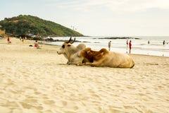 印度,果阿, Vagator海滩 免版税库存照片