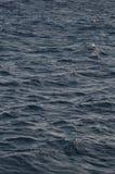 印度洋亮光星期日纹理水 库存图片