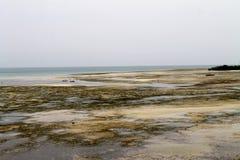印度洋海滩,桑给巴尔,坦桑尼亚,非洲 免版税图库摄影