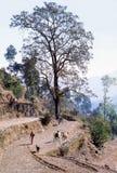1977年 印度 黄牛拉扯的耕犁 免版税库存照片