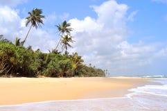 印度洋的海岸 免版税库存图片