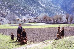 1977年 印度 除草在麦田 库存图片