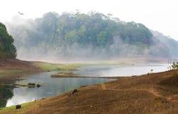 印度Kumily,喀拉拉,印度-国家公园Periyar野生生物圣 免版税库存照片
