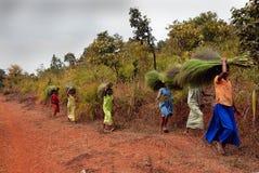 印度orissa部族妇女 免版税库存照片