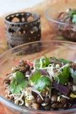 印第安扁豆沙拉 免版税图库摄影