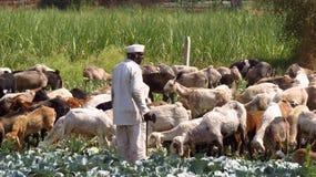 印第安牧羊人 免版税库存图片