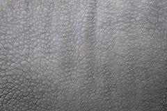 印第安犀牛的皮肤的详细资料 图库摄影