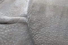 印第安犀牛的皮肤的详细资料 库存图片