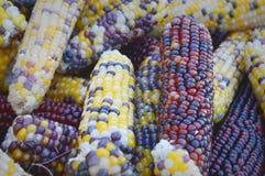 印第安玉米背景 库存图片