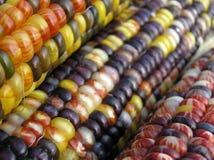 印第安玉米行 免版税库存图片