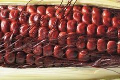 印第安玉米 库存图片