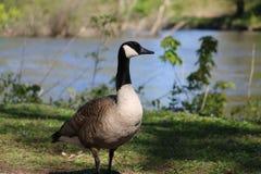 印第安纳状态 公园 免版税库存图片
