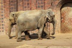印第安语的大象 库存照片