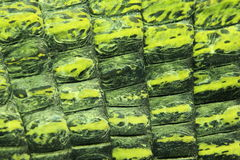 印第安gavial详细资料 图库摄影