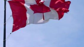 印象深刻的挥动在风的杆的国家标志加拿大旗子红色白色枫叶横幅在蓝天晴朗的背景 影视素材