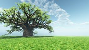 印象深刻的猴面包树 库存照片