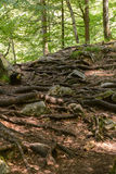 印象深刻的树根系统 库存图片