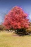 印象派红色树,新英格兰,多重曝光, 2016年10月18日 库存图片