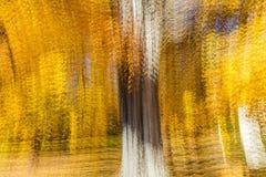 印象派黄色树,新英格兰,多重曝光, 2016年10月18日 图库摄影