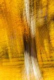 印象派黄色树,新英格兰,多重曝光, 2016年10月18日 库存图片