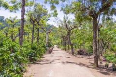 危地马拉咖啡种植园 免版税图库摄影