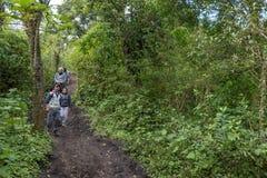 危地马拉- 2017年11月10日:在途中的马服务对帕卡亚火山火山在危地马拉 帮助人上升 免版税图库摄影