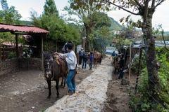 危地马拉- 2017年11月10日:马和地方人服务帮助的游人的上升到帕卡亚火山火山 免版税库存图片
