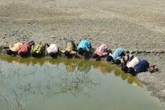危机印度sundarban水 免版税库存图片