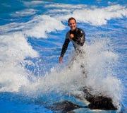 危险凶手显示鲸鱼 图库摄影
