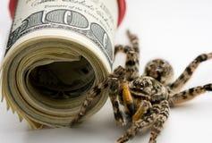 危险卫兵货币毒物卷蜘蛛立场 库存照片