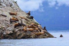 危险的星海狮 库存照片