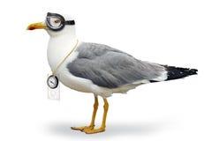 危险的海鸥 库存照片