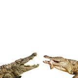 危险的野兽 免版税库存图片