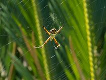 危险蜘蛛网被混乱的蜘蛛 库存图片