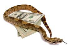危险货币 免版税库存图片