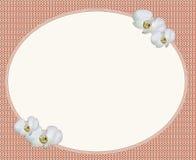 卵形框架和白花 免版税图库摄影