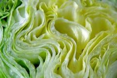 卷心莴苣。 库存图片