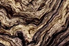 卷曲木纹理 库存照片