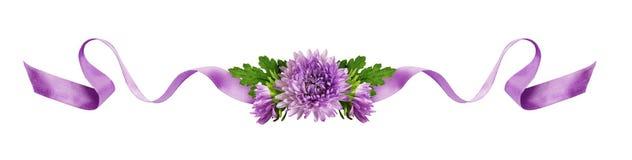 卷曲的淡紫色丝绸丝带和翠菊花构成 免版税库存照片
