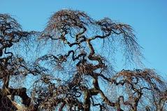 卷曲结构树 库存照片