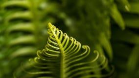 卷曲绿色叶子在森林里 免版税库存图片