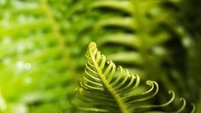 卷曲绿色叶子在森林里 免版税库存照片
