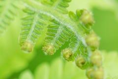 卷曲绿色叶子在森林里 库存照片