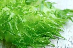 卷曲绿色莴苣 库存图片