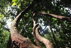 卷毛森林自然雨 免版税图库摄影